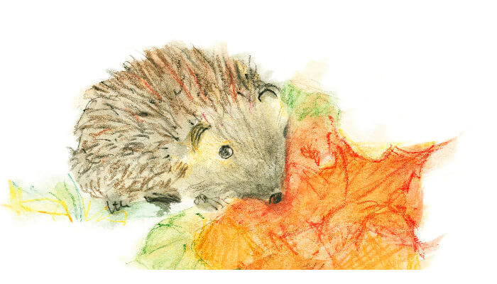 Igel Illustration